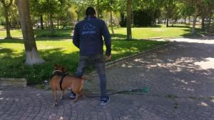 Adiestrador de Perros Madrid